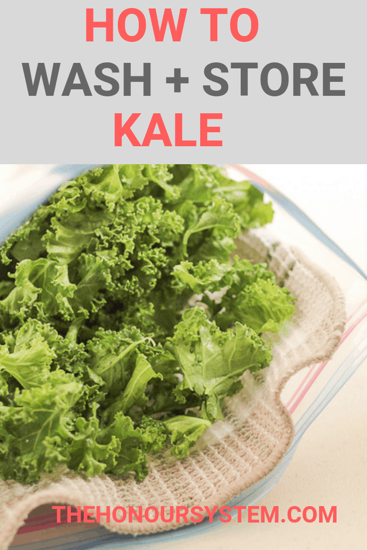 How to Wash and Store Kale Pinterest Graphic